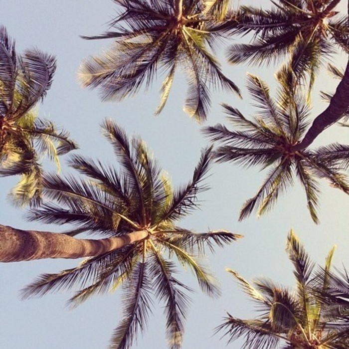 palmeras camara forntal